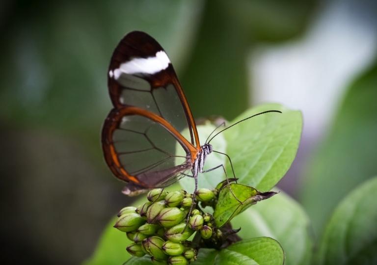 Schmetterlingshaus im Maxi Park Hamm
